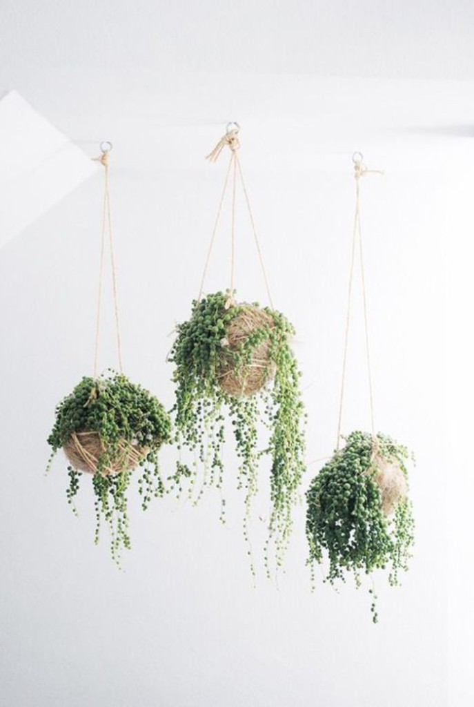 Up Your Bohemian Vibe: Five Striking Plants To Consider Hanging Indoors U2013  The Colorado Nest