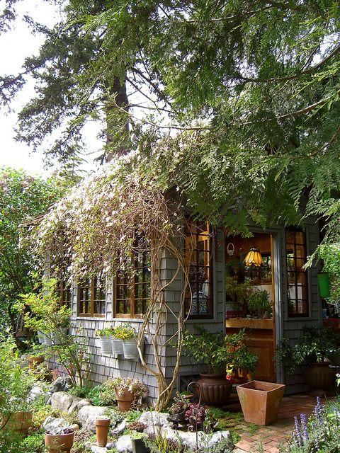 vine covered potting shed