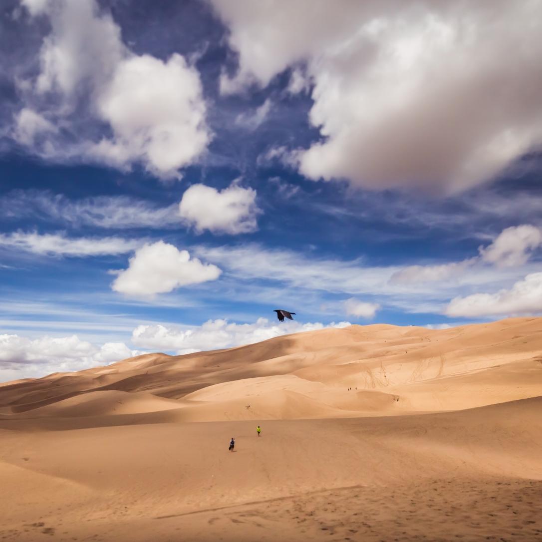 dunes-bird