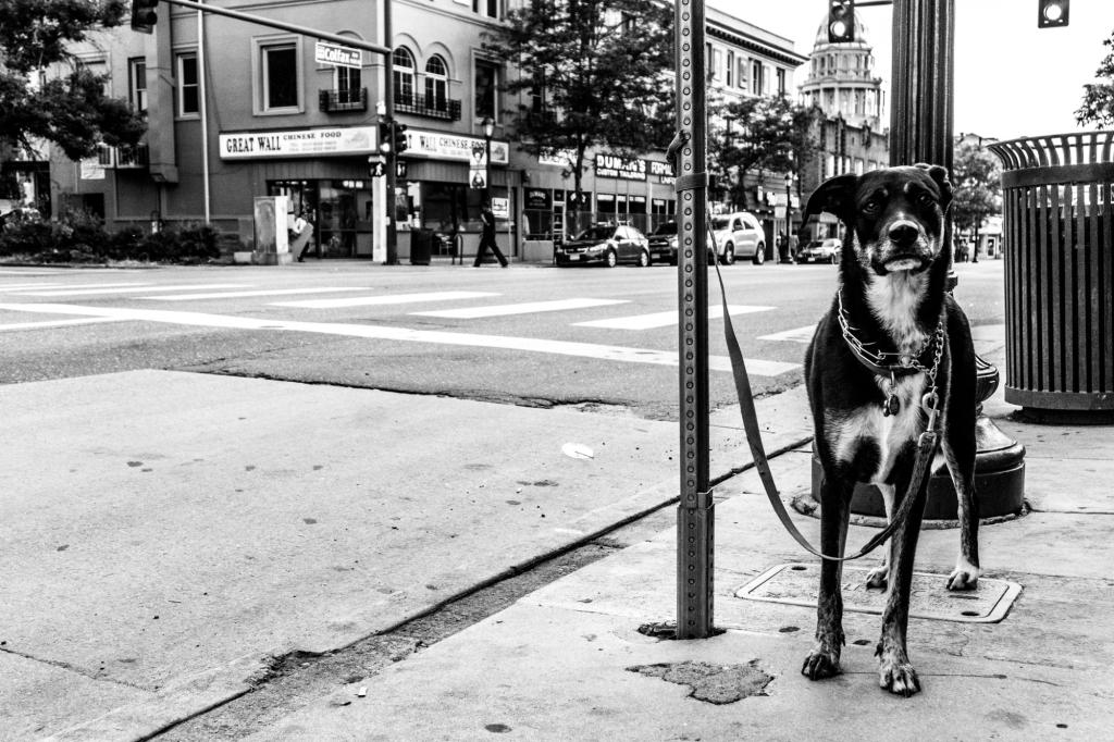 Denver street photographer