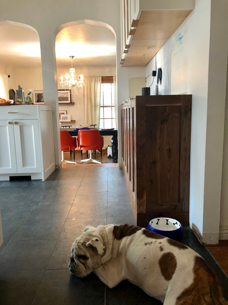 bulldog in kitchen